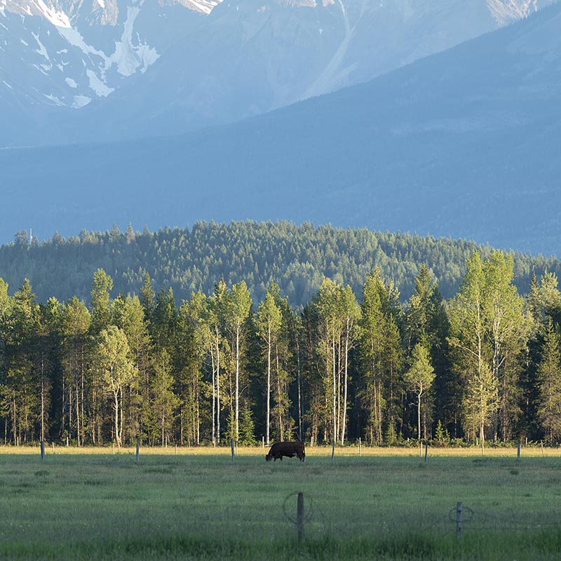 arthur_los-xxl_prints-golden-rocky-mountains